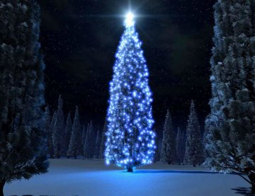 kerstboom.jpg - Terazzo en vloerenbedrijf Traas - Heinkenszand
